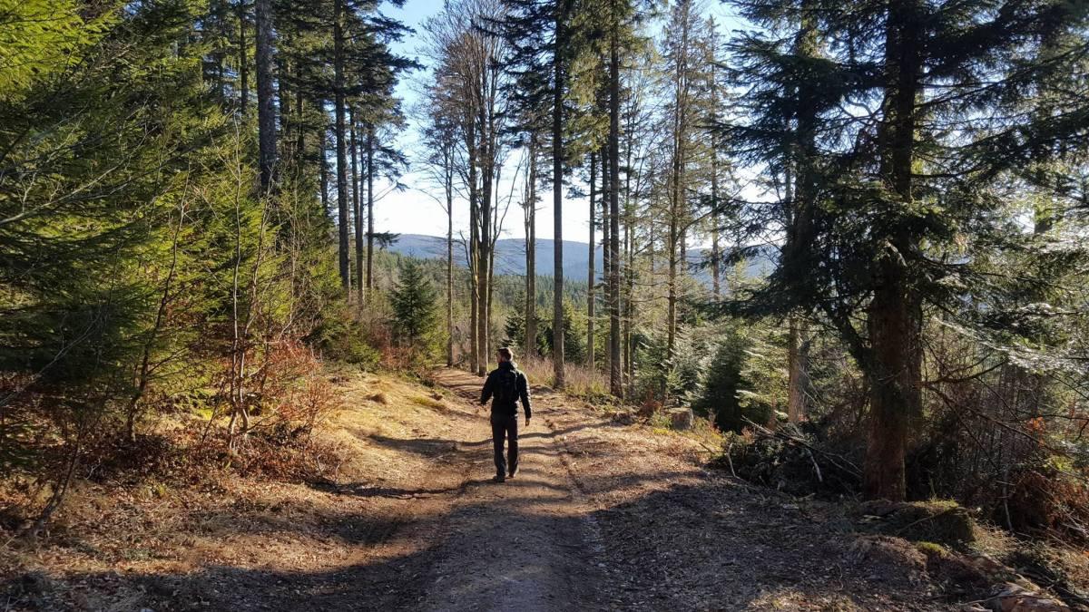 Un petit tour en Alsace et dans les Vosges