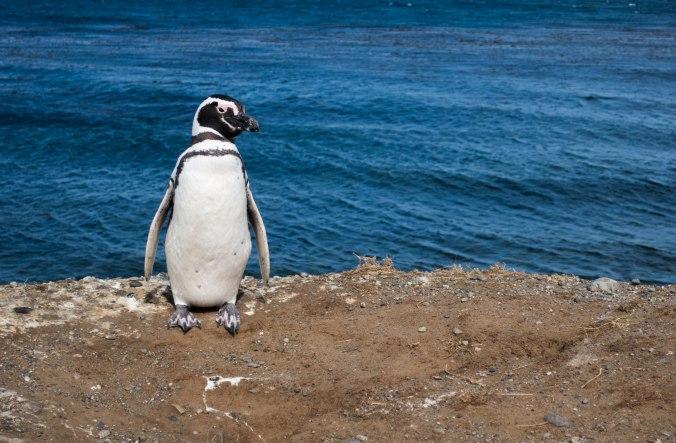 Monument nacional los pinguinos