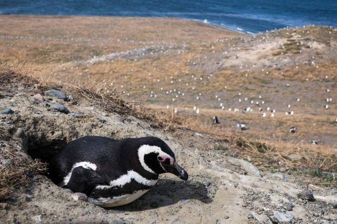Monument naturel los pinguinos